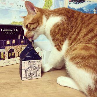 マイリトルボックスを狙う猫